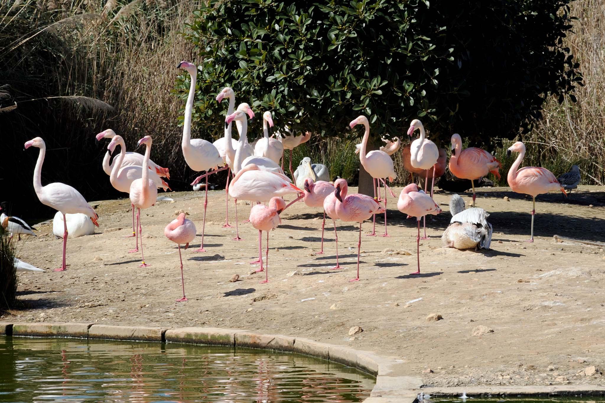 Bird Park, Kennedy Grove, Malta